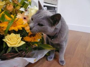 今は亡き店主の愛猫ミュー様