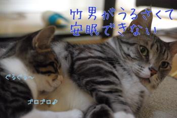 安眠妨害されているレオン