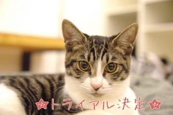 祝:トライアル 里親募集中の子猫 竹男