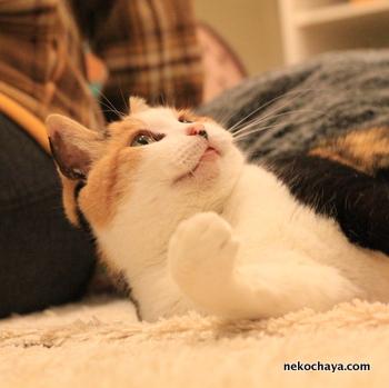 三毛猫ふじこ 120%美化 お見合い写真