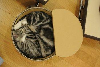 猫缶 レオン味