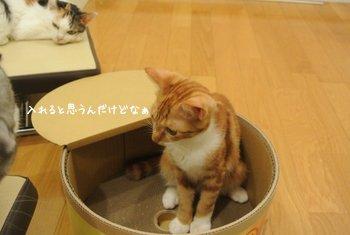 猫缶の中でつぶやく新庄選手