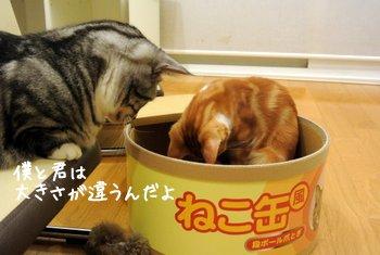 猫カフェ猫茶家所属のレオンに説得される新庄選手