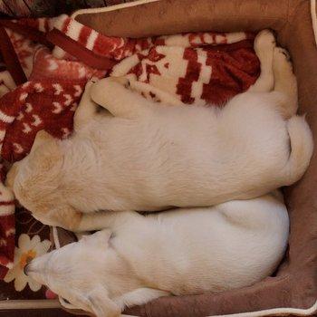 避難先を探している子犬2匹