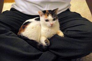 猫ベットよりお客さんの膝が好きなしずか嬢