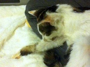 膝の上で眠ってるしずか嬢。息が止まってないかドキドキさせられます