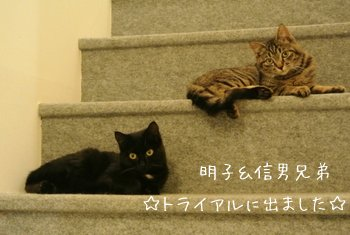 階段でくつろぐ明子&信男