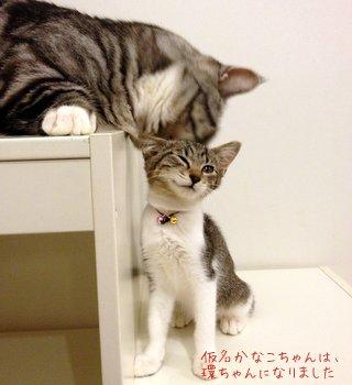 仮名:多香子さんは環ちゃんになりました。