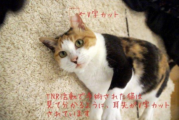 フジコのV字カット