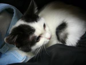 保護猫カシュー in 病院
