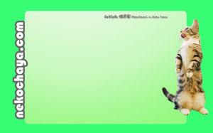 立ち上がってご飯を催促するマンチカンレオン壁紙(グリーン)