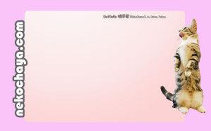 マンチカンレオン壁紙(ピンク)
