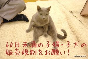 子猫・子犬の販売規制に協力をお願いします