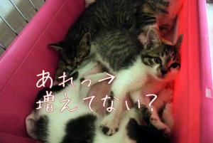 猫分裂して増えてない?