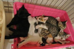 里親募集中の子猫 世田谷保護猫!