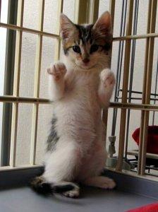 ホールドアップする子猫 みっちゃん