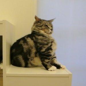 デブ猫レオン!