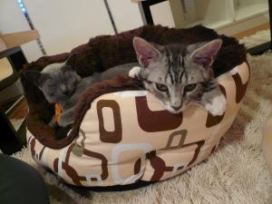レオンがみゅー様ベッドを争奪