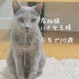猫Staffはな