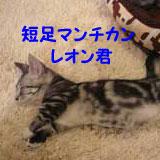 猫Staffレオン