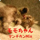 猫Staffモモ