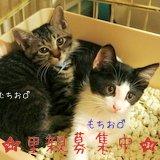 保護猫スタッフ 黒キジの子猫 仮名むちお