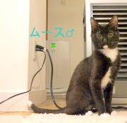 白黒タキシード猫。超絶ビビリマン。難易度トリプルA